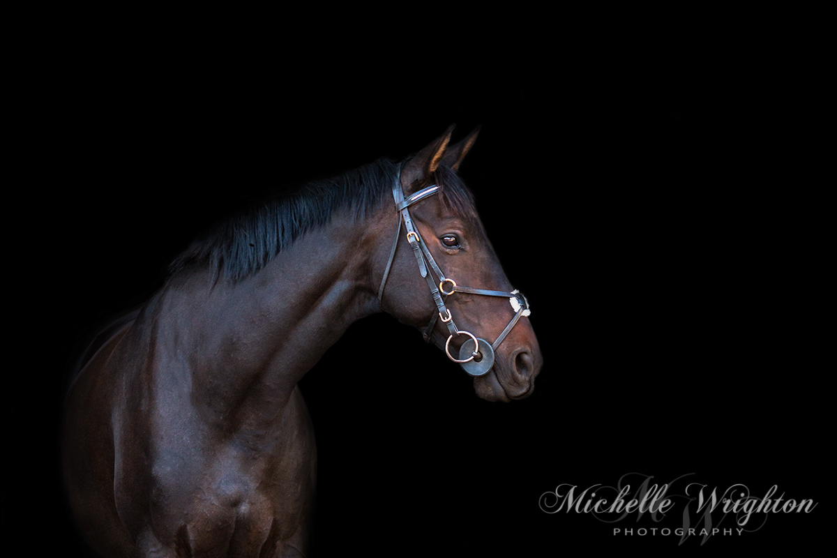 Natural light black background horse photography