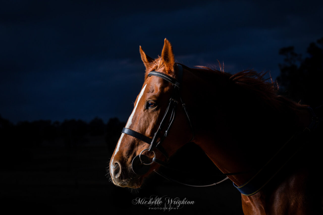 Outdoor studio lighting photograph of a chestnut horse