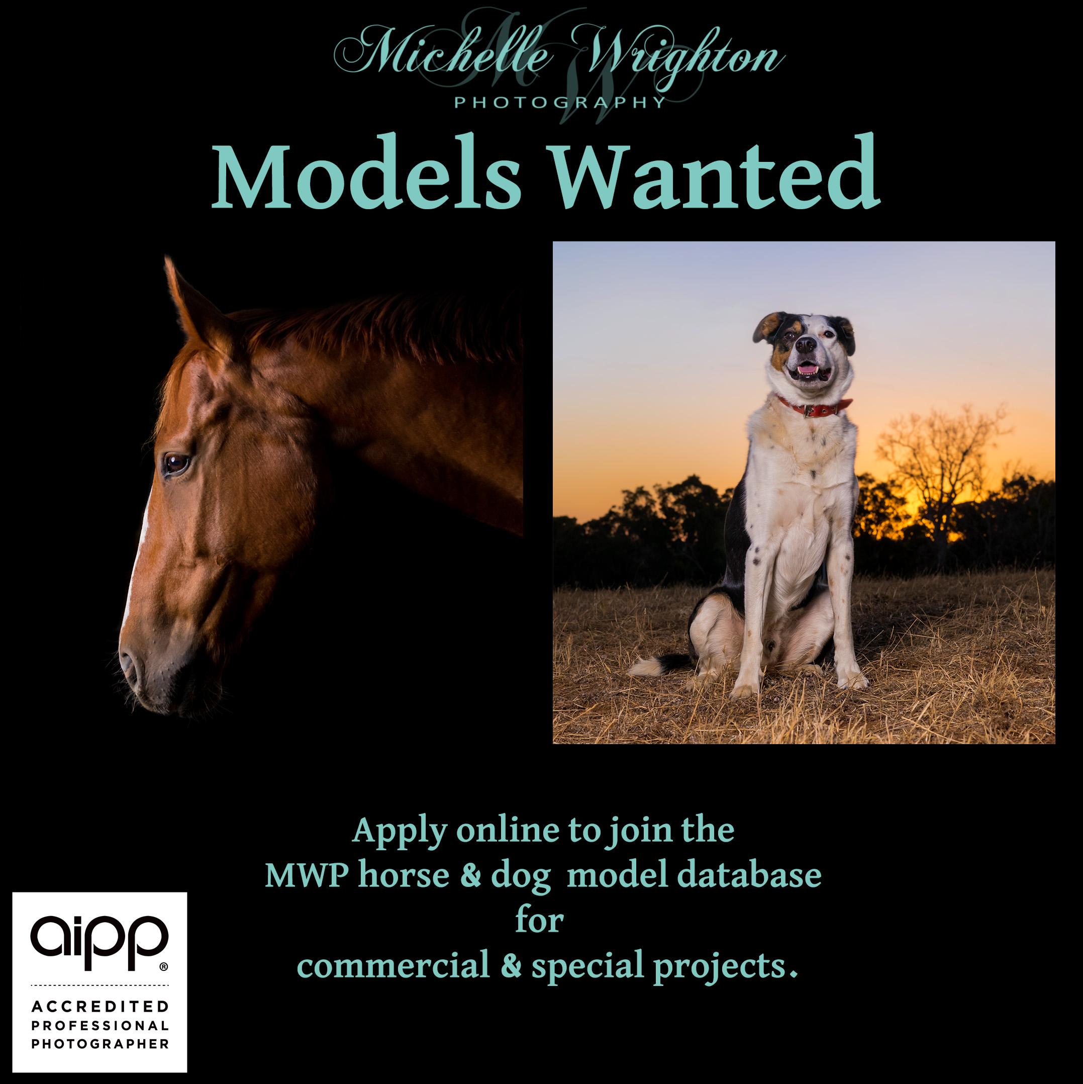 Horse and Dog Photography Model Database