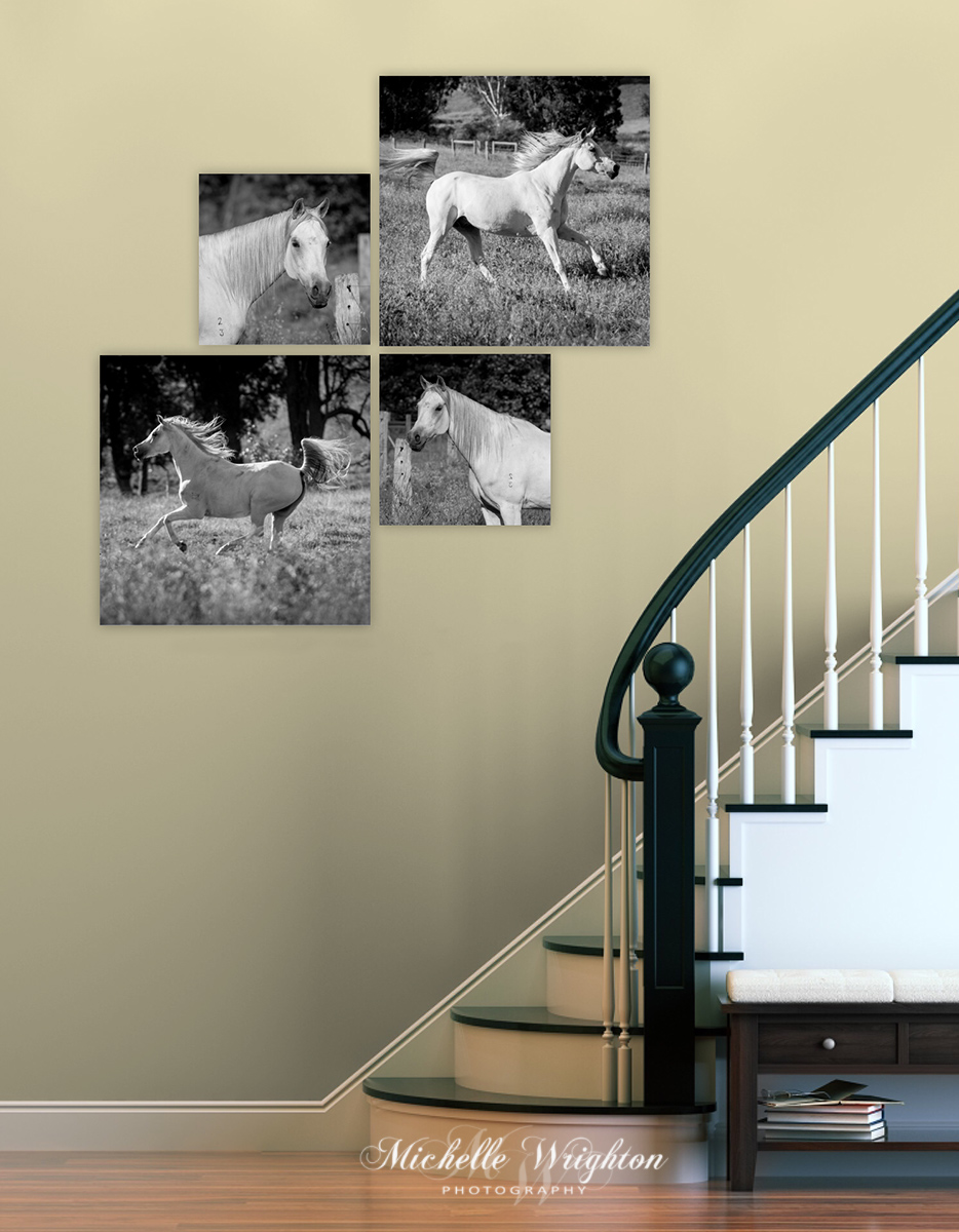 Grey Arabian horse photography stairs collection
