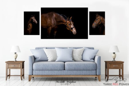 Three fine art canvas horse photography prints for lounge room decor