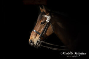 Black background studio horse photography