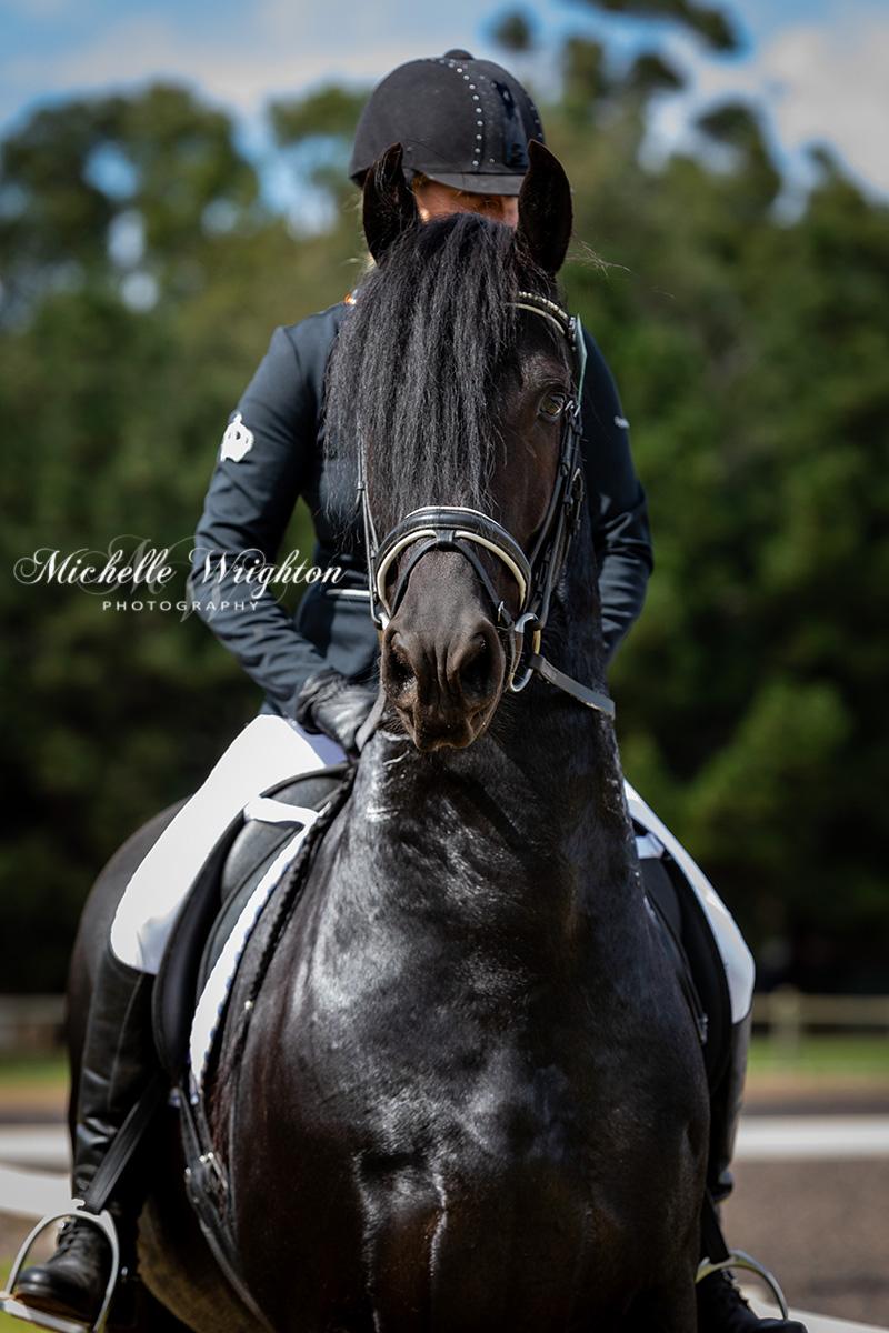 Friesian horse photograph Maserati IBOP