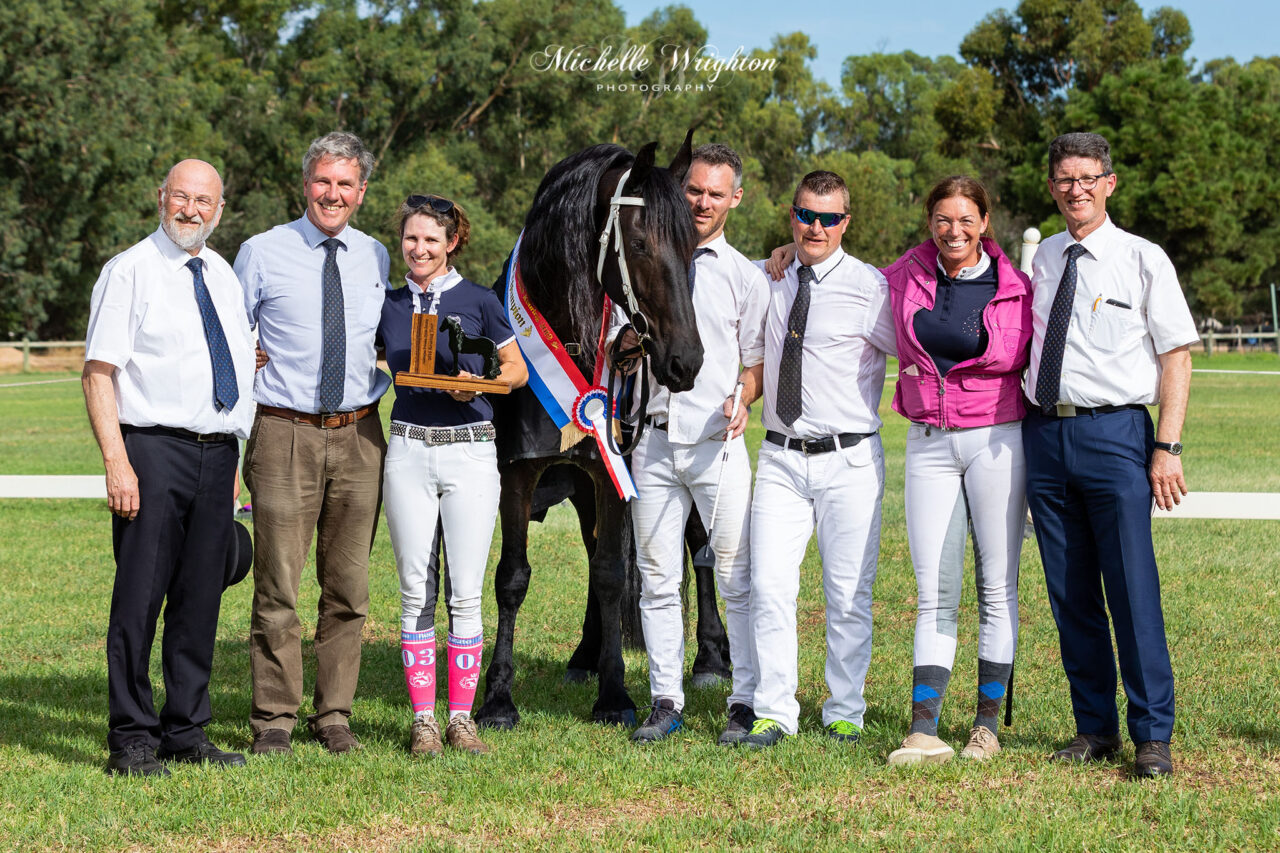 Champion Friesian mare So Special KP at the WA 2019 Keuring