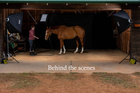 Chestnut Horse studio light photography behind the scenes