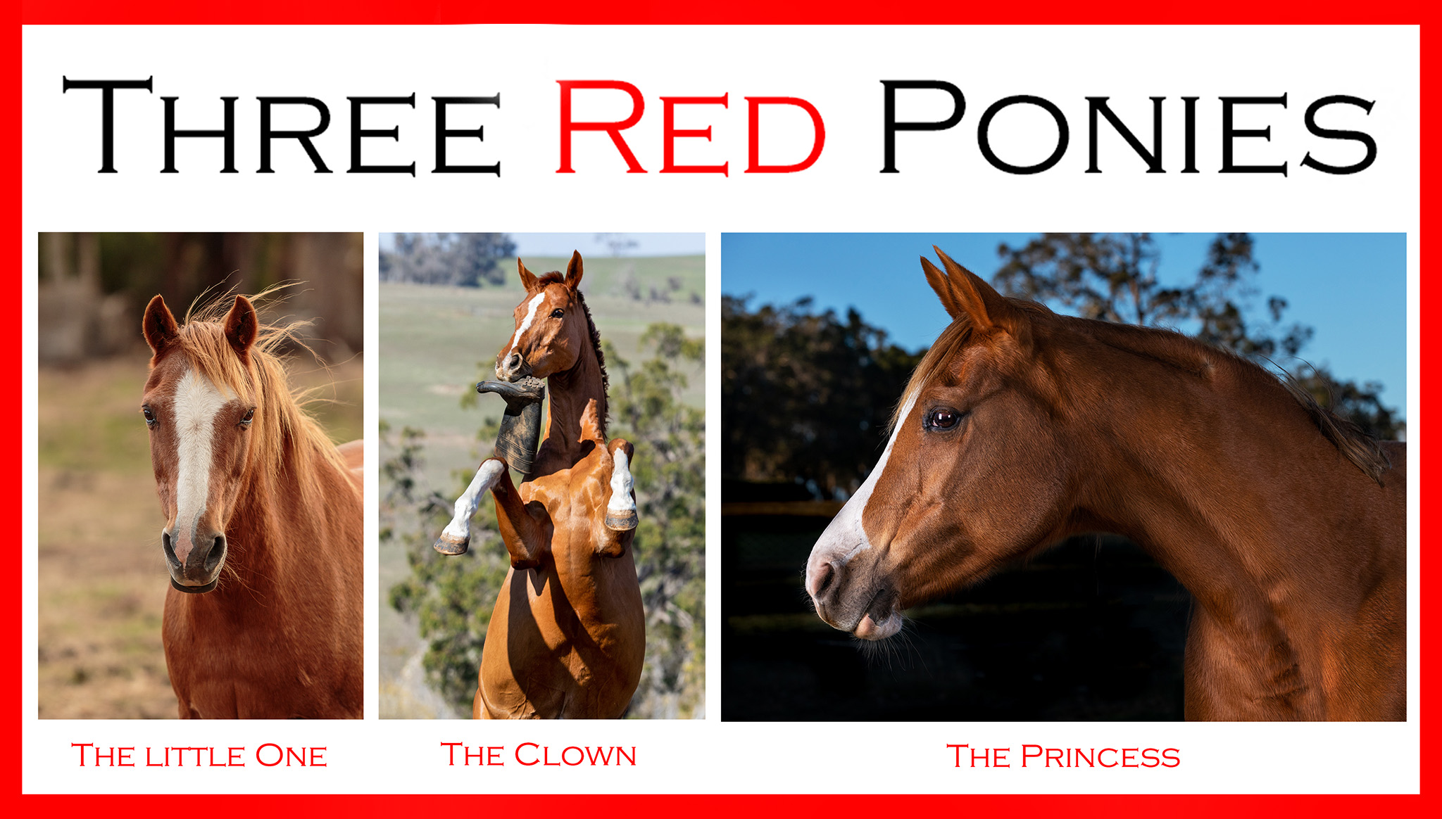 Three Red Ponies Announcement