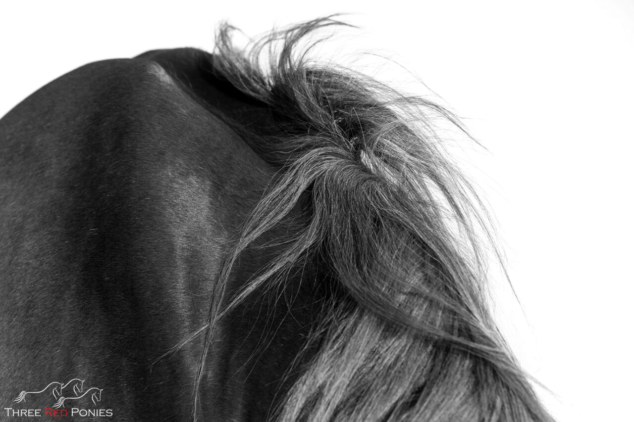 Fine Art black and white limited edition fine art horse prints by Michelle Wrighton