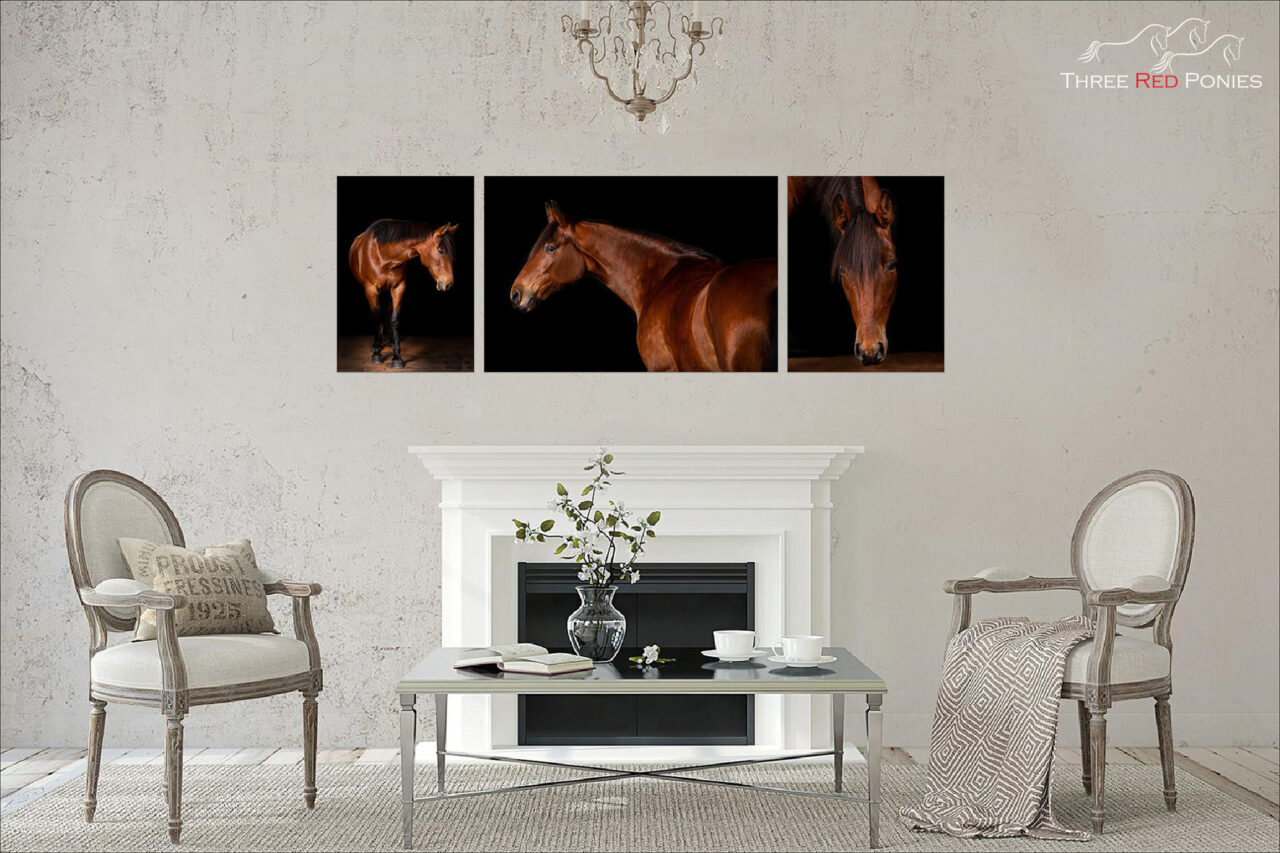 Horse Studio Photography Wall Art