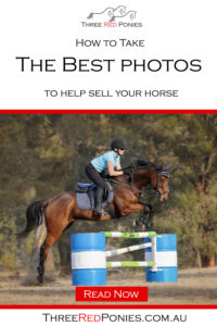 How to take the best photos to help sell your horse pinterest graphic