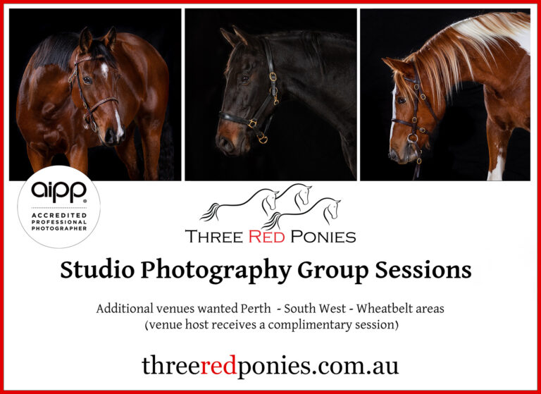 Horse studio photography group sessions - Michelle Wrighton Photography