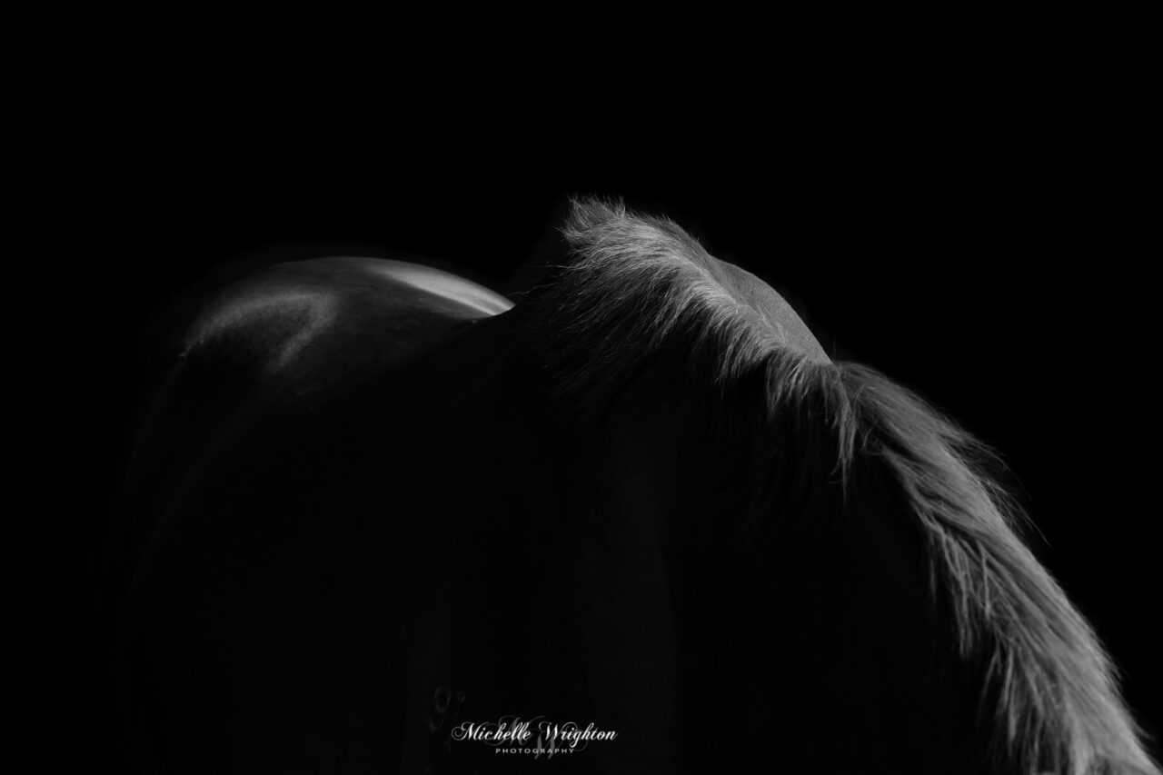 black and white abstract horse fine art photography limited edition art print by professional Albany Horse Photographer Michelle Wrighton
