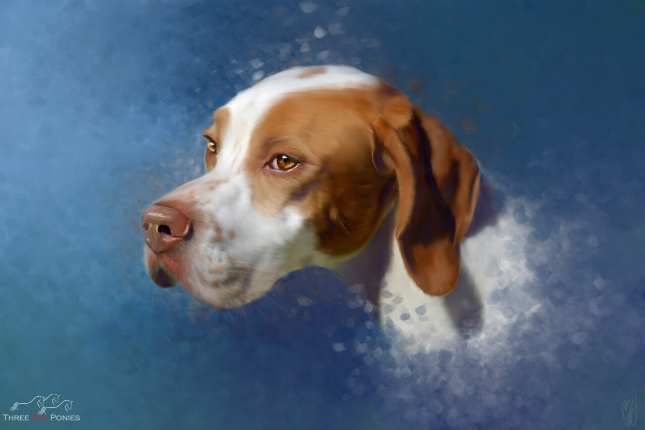 Pet dog portrait painting of a red and white pointer on blue background