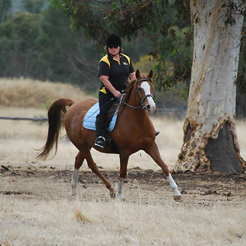 Chestnut arab mare ridden by the photographer