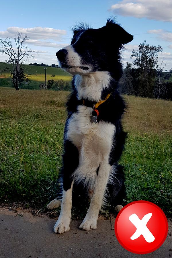 dog photo bad example