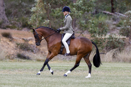 SWSHA Championship Show Official Ponies event, horse and rider