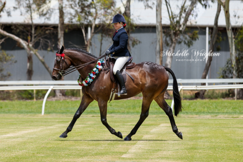 Show horse with rider at the Mount Barker Horse show