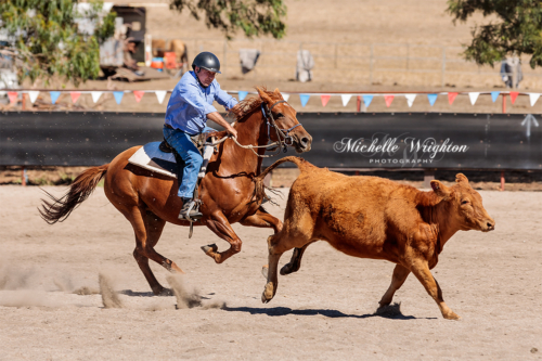Mayanup campdraft horse with rider and cow