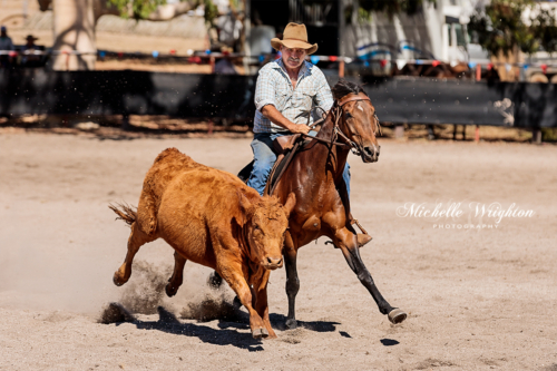 Mayanup campdrafting horse with rider and cow