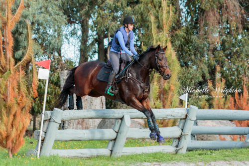 Capel cross-country horse event with horse and rider over fence jump