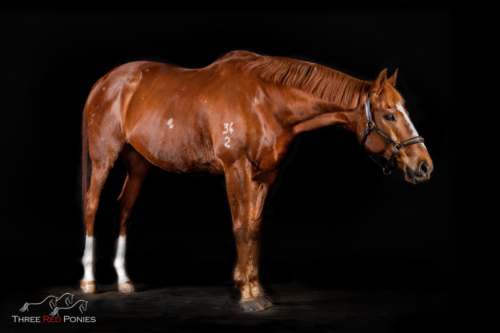 Black background equine studio portrait photography