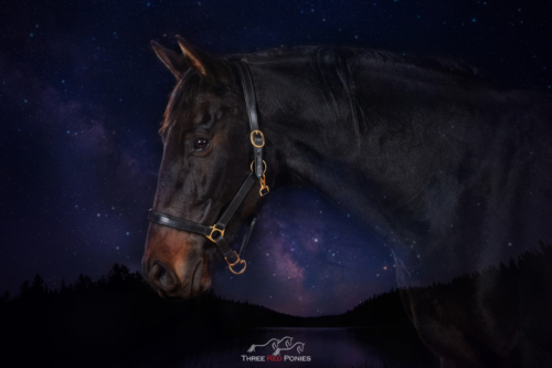black warmblood horse on a star sky background