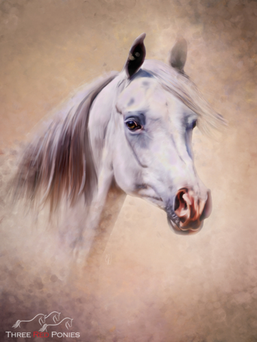 Grey arabian horse pet portrait painting by Michelle Wrighton