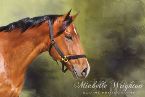 Artistic photo editing equine photography bay-on-green