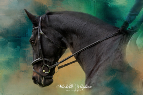 Artistic photo editing black horse painted background