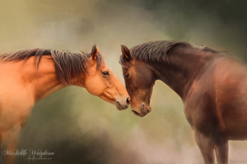 Artistic photo editing best friends horses