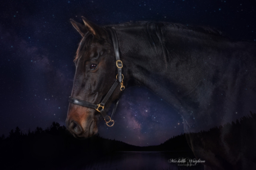 Black warmblood horse double exposure photograph over stars and lake background.