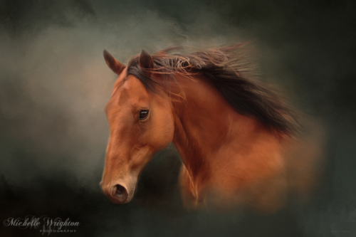 Bay horse and painted green background Artistic photo editing Michelle Wrighton
