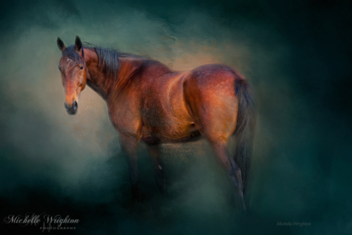 Artistic photo editing bay horse on green background